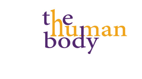 "The words ""the human body."""